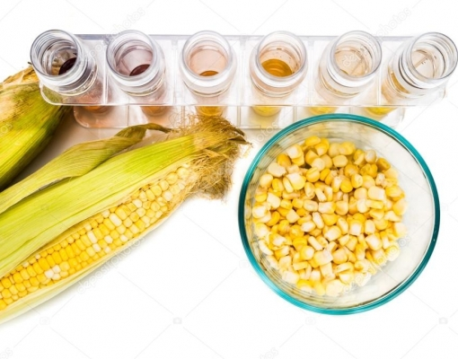 Grãos de milho em diferentes recipientes