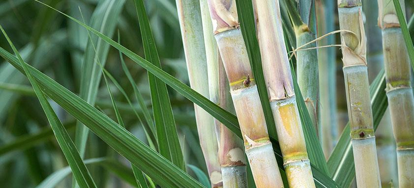 Diesel verde cana de açúcar ANP