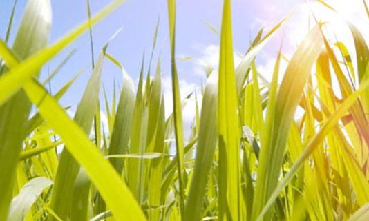 Biocombustíveis ajudam empresas a neutralizar emissões de poluentes