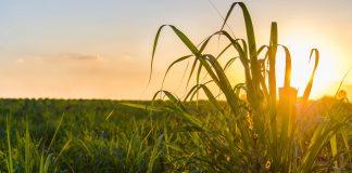 O que as usinas de etanol e o agronegócio brasileiro podem esperar do governo de Joe Biden