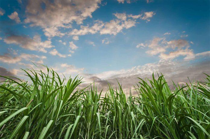 Brasil está em vias de ganhar um gigante na produção de açúcar e etanol