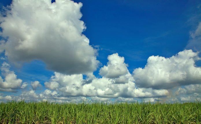 O papel dos biocombustíveis na redução de preços de óleo e gasolina