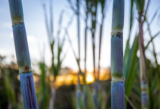 Renovação do Protocolo Agroambiental Etanol Mais Verde